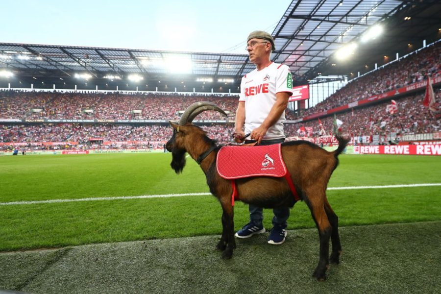 COLOGNE, GERMANY - AUGUST 23: Hennes the 1. FC Koeln mascot is seen prior to the Bundesliga match between 1. FC Koeln and Borussia Dortmund at RheinEnergieStadion on August 23, 2019 in Cologne, Germany. (Photo by Lars Baron/Bongarts/Getty Images)